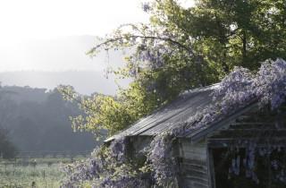 Brauer_M_Landscapes_001